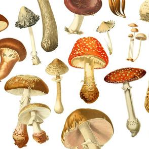 large vintage fungus