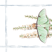 Tea Towel: Luna Moth watercolor
