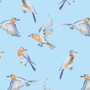 Bluebird party- Blue