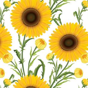 Sunflowers Large on White