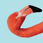 Rflamboyant-flamingo_shop_thumb