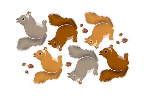 Squirrels & Acorns Teatowel fabric by heather_anderson on Spoonflower - custom fabric