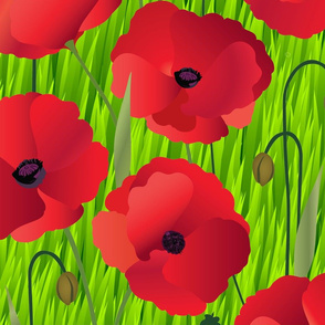 Red Poppy Flowers on Grass