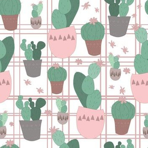 cacti pink and green