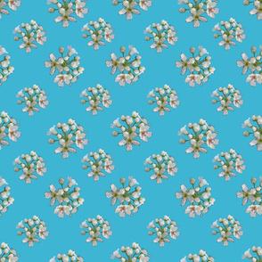 White Apple Blossoms on Aquamarine