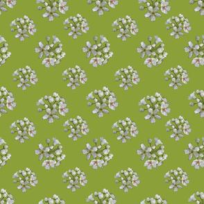 White Apple Blossoms on Apple Green