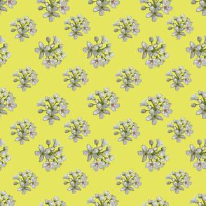 White Apple Blossoms on Lemon Yellow