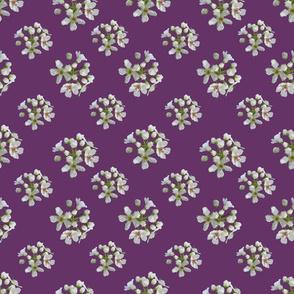 White Apple Blossoms on Plum Purple