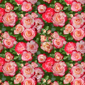 Pink Cream Ombre Roses on Green