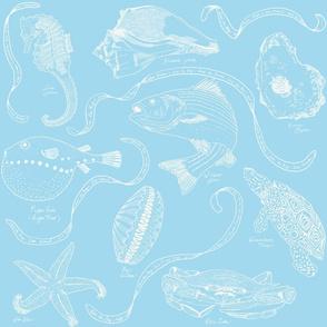 Chesapeake Treasures White on Baby Blue