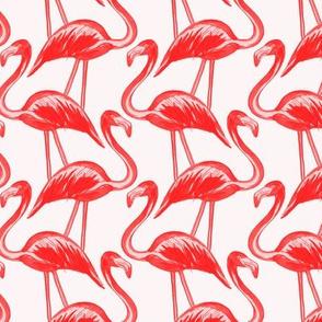 flamingos red pink