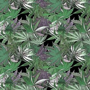 Cannabis Green Joy