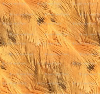 Chicken Feathers: Imogen