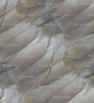 Goose Feathers: Valentine