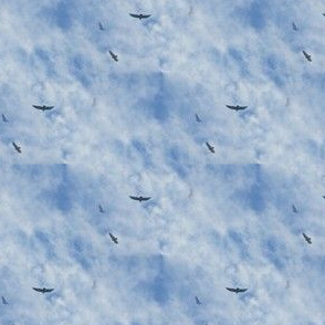 Vultures Overhead | Seamless Bird Photo Print