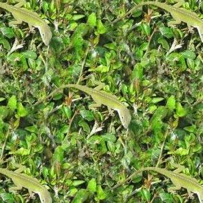 Lizard Ticket | Seamless Nature Photo Print