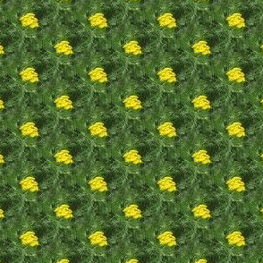 Yellow Yarrow | Seamless Floral Dot Photo Print