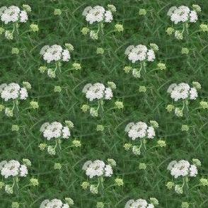 White Yarrow | Seamless Floral Dot Photo Print