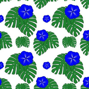 Blue Hibiscus with Monstera on White