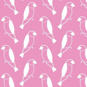 sparrows on pink