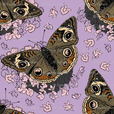Stonecrop and Buckeye lavender 8x8