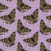 Stonecrop-and-buckeye-lavender-8x8_shop_thumb