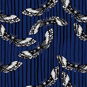 Death's-head Hawkmoth Navy Blue w/ Ink stripe