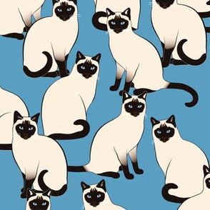 Siamese Cats Crowd Colofrul on Blue