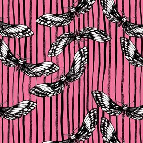 Death's-head Hawkmoth Pink w/ Ink stripe
