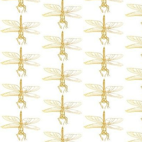 Dragonfly drawing, Gold