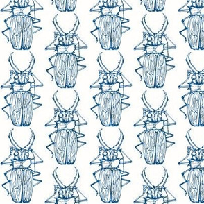Beetle Drawing, Rich Blue on White
