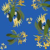 2941-Cockatoo-1-and-Frangipani-Blue-Bright