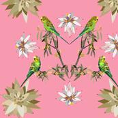 2941-Budgerigar-Johnsonia-Pink