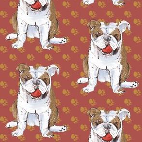 Tan Bulldog on Pawprints