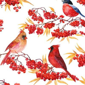 birds and Rowan