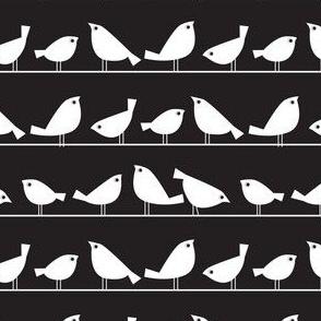 Birds on black