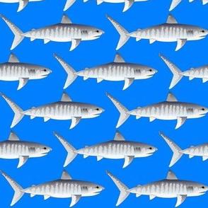 Tiger Sharks on ocean blue background.