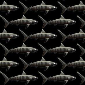 Negative Tiger Sharks on black background.