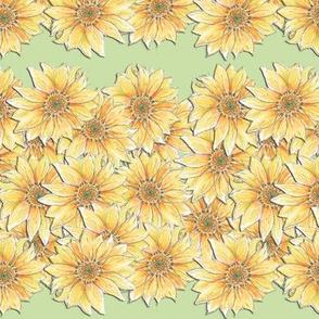 Hand-drawn Sunflower Stripe