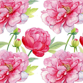 peonies watercolor
