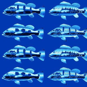 Four Peacock Bass blues