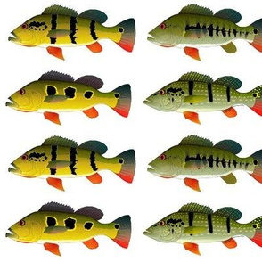 Four Peacock Bass (Line) on white