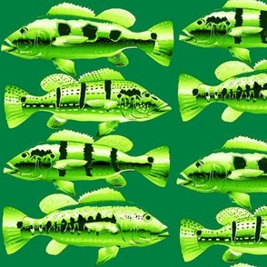 Four Peacock Bass (cluster) in greens
