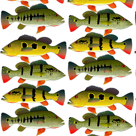 Four Peacock Bass (cluster)  fabric by combatfish on Spoonflower - custom fabric