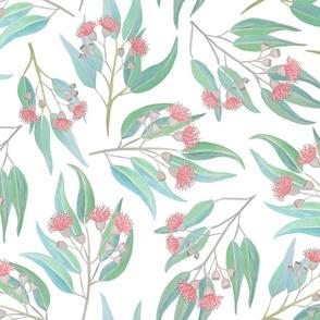 Flowering Gum Eucalyptus pink