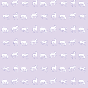 Flock of Lambs  in lavender