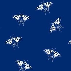 swallowtail on navy
