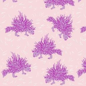porcupine_1