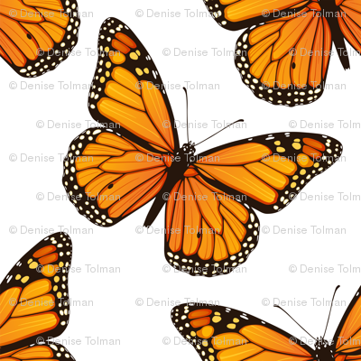 Monarch Butterflies Tossed on White