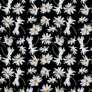 Daisies - small